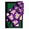 Gladiolus-icon