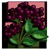 Elderberry-icon
