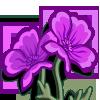 Purple Poppies-icon