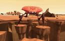 8 krab on the rocks