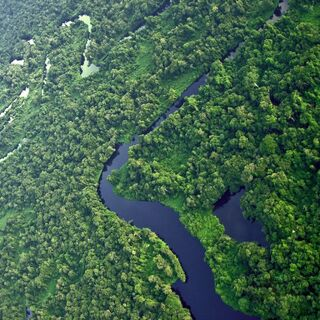 The Amazon Forest.