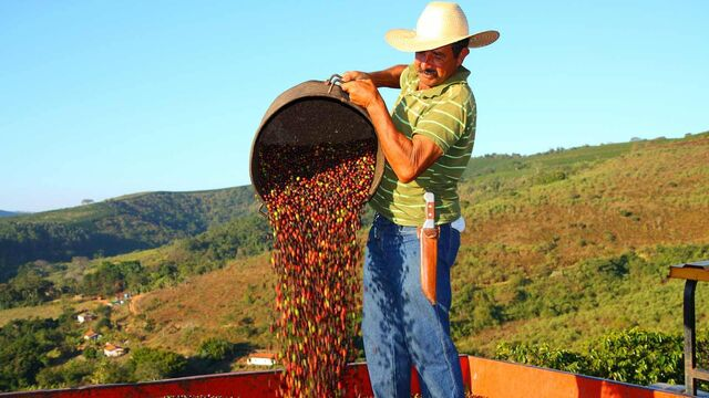 File:Mexicanxcoffee-20-1600x901-41.jpg