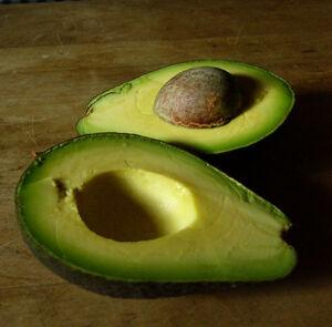 Avocado-6204
