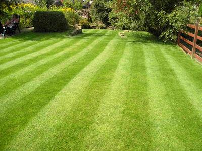Lawn 1