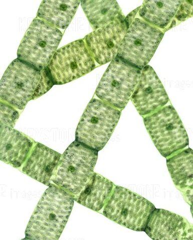 File:Algae spire.jpg