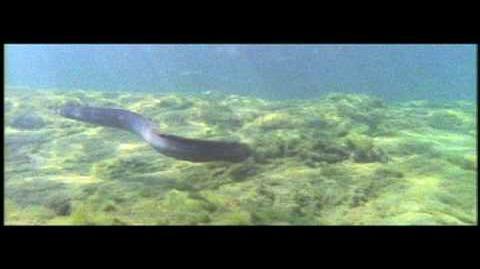 Aquaman TV Spot
