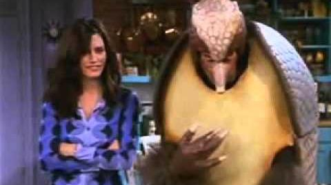 Friends Holiday Armadillo Hanukkah Highlights