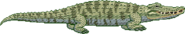 Crocodiles Position