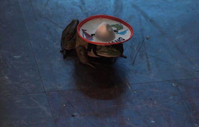 Señor Chang frog