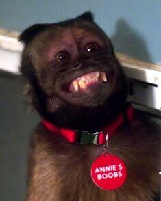 Annie's Boobs