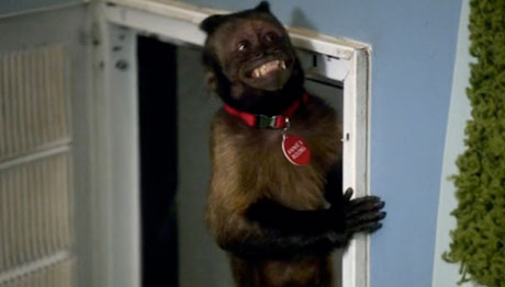File:Annies-boobs,-the-monkey.jpg