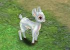 File:Little White Deer.jpg
