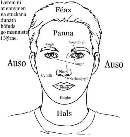 File:Parts of the head in nuirn.png