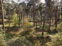 Veluweforest