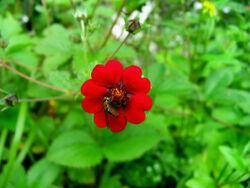 Flower in Valley of Eternal Rain 2