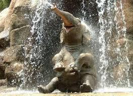 File:Elephant22.jpeg