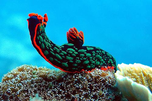 File:Sea slug 04.jpg