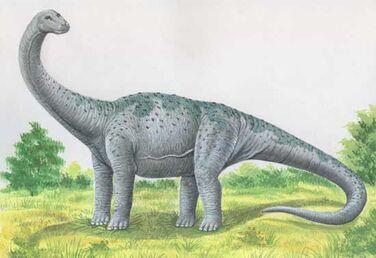 Pcab261 kotasaurus