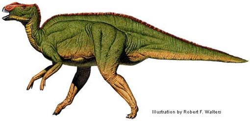 File:Walters hadrosaurus 510.jpg
