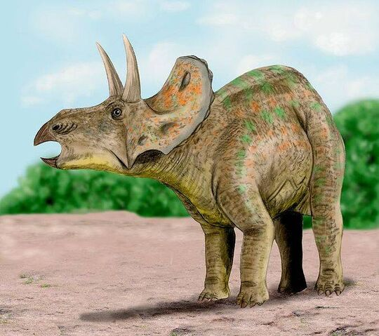 File:DiceratopsNT.jpg