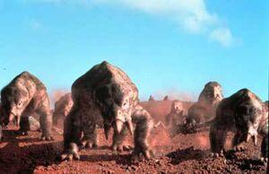 Placerias herd