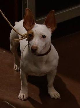 File:Dog 2015.jpg