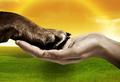 Miniatura de la versión de 17:19 12 abr 2013