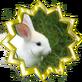 Lucky Rabbit Editor