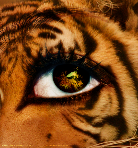 File:Eye of the tiger by crazy kiwii-d2yhfto.png