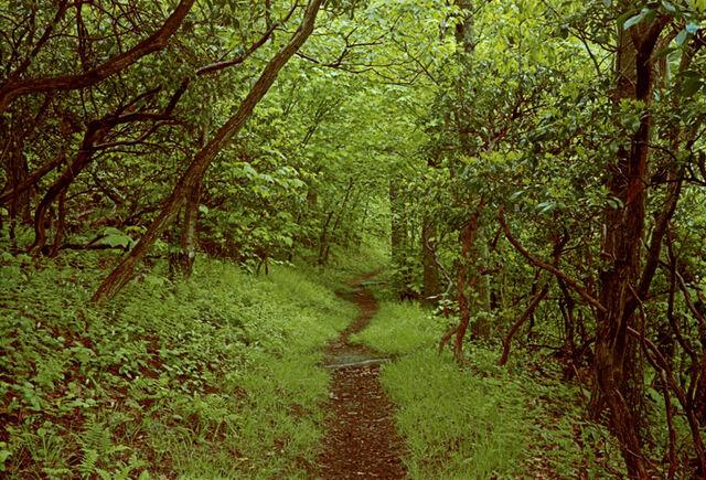 File:Appalachian trail1.jpg