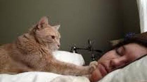 Cute cats waking up owners - Funny cat compilation