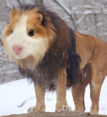 File:Hamster Lion.png