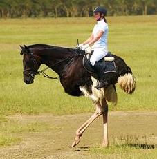 File:OSTRICH HORSE.png