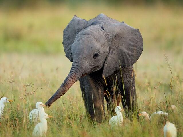 File:Baby-elephant.jpg
