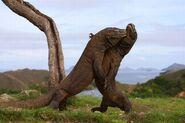 PAY-Wild-Komodo-dragons (3)