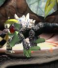 Full Breed Orochi