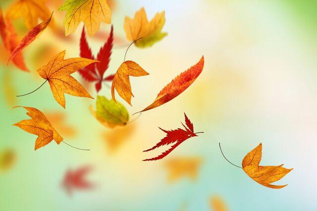 File:Leaves falling.jpg