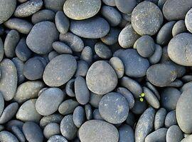 23396340.rocks
