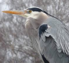 File:Heron2.jpg