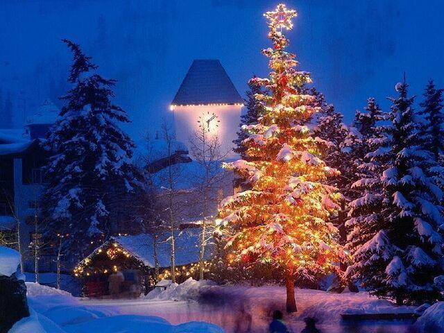 File:Christmas tree.jpg