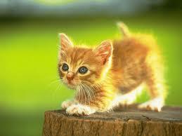 File:Kitten Mitten.jpeg