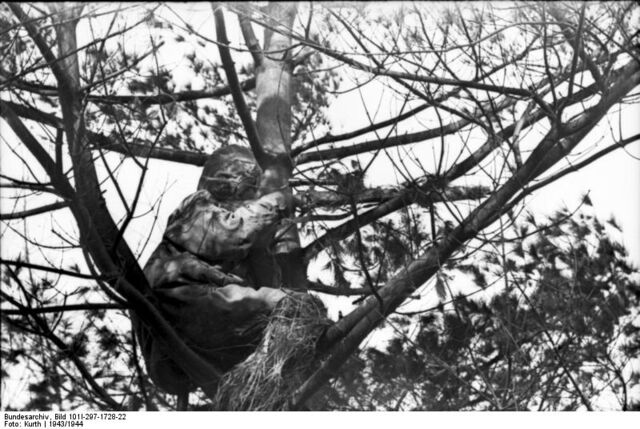 File:Sniper in the tree.jpg