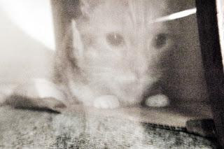 File:Ghost cat.jpg