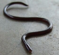 Blind-snake