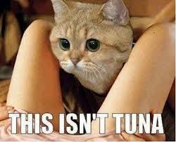 File:Tuna.jpg