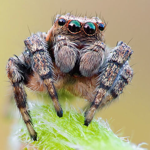 File:Spider Close Up.jpg