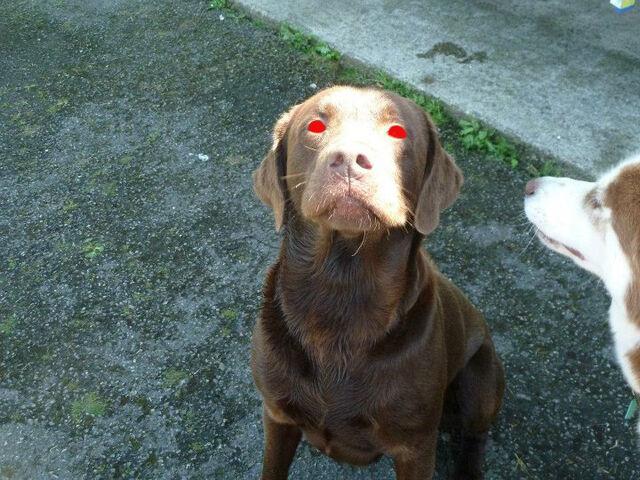 File:Demon dog.jpg