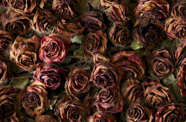 File:Deadroses.png