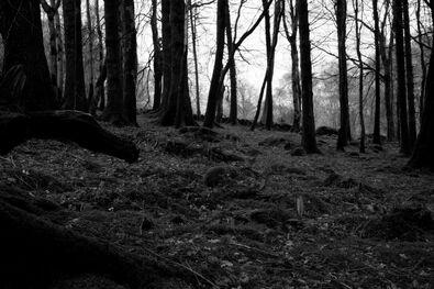 Woods2-0