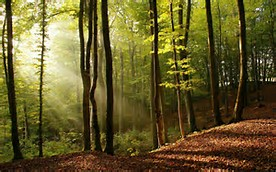 File:Crescent forest.jpg